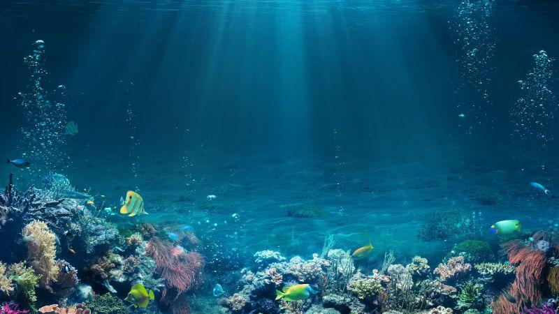 Sonnenstrahlen durchdringen das hellblaue Wasser über einem Korallenriff, durch das exotische Fische schwimmen.