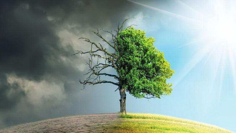 Ein zweigeteilter Baum ist zu sehen. Auf der linken Seite ist der Boden aufgerissen, darüber sind graue Wolken. Rechts erstreckt sich eine grüne Wiese unter einem blauem Himmel.