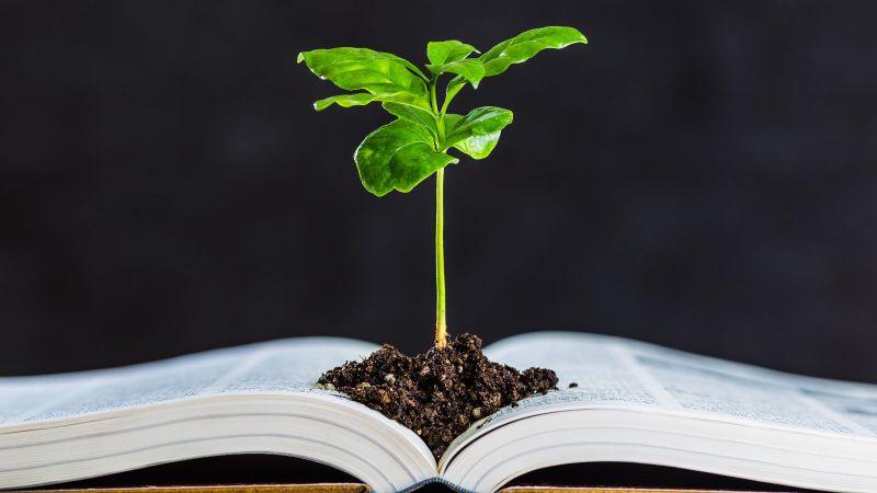 Ein Jungtrieb wächst aus einem Häufchen frischer Erde inmitten eines Aufgeschlagenen Buches. Der dunkle Hintergrund ist unkenntlich.