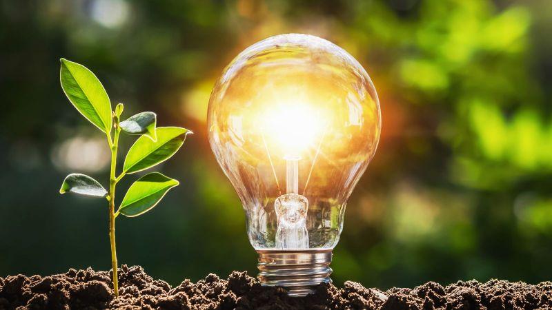 Aus frischer dunkler Erde wächst ein Jungtrieb heran. Neben ihm steckt eine leuchtende Glühbirne im Boden. In der Unschärfe des Hintergrunds scheinen Sonnenstrahlen durch das grüne Blätterdach umliegender Bäum.