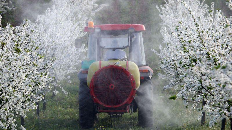 Ein Traktor fährt durch zwei Reihen blühender Kirschbäume. Aus dem rückseitig montierten Anbaugerät wird eine farblose Flüssigkeit auf die Baumkronen versprüht.