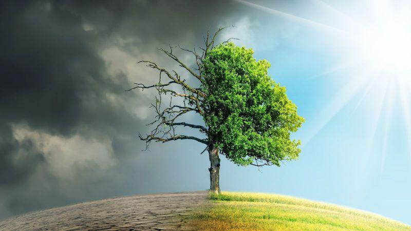 Ein Baum steht auf einer gekrümmten Erdoberfläche. Auf der linken Seite ist der Boden aufgerissen, darüber graue Wolken hinweg. Rechts ist eine grüne Wiese unter blauem Himmel.