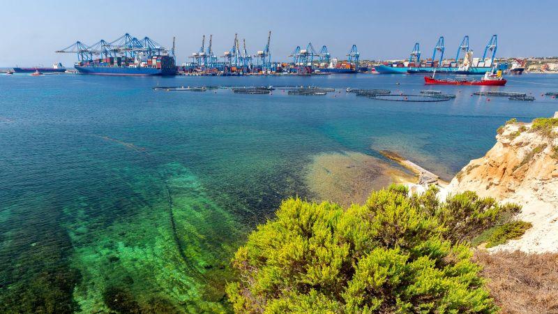 Der Blick des Betrachters fällt von der Küste aus auf einen nahelliegenden Kontainerhafen mit blauen Kränen. Im Uferbereich schimmern Algen durch das seichte grüne Wasser.
