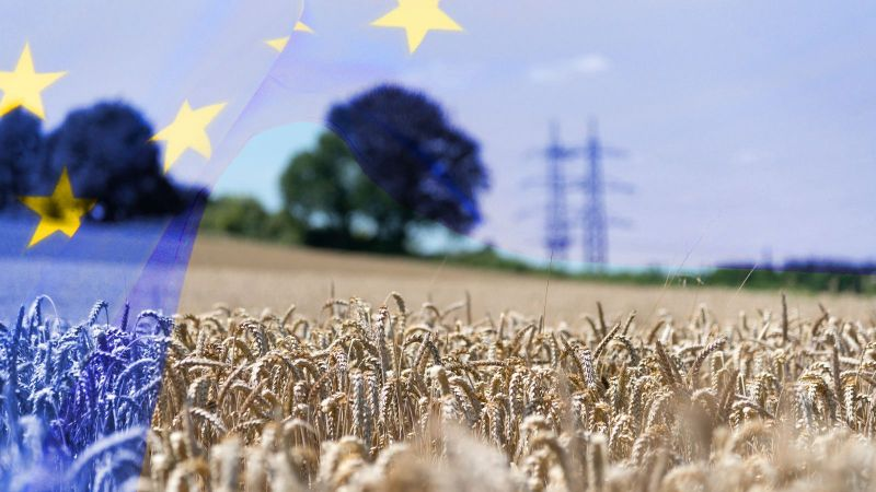 Eine transparente Flagge der Europäischen Union weht in das Landschaftsbild eines Kornfeldes. Im Hintergrund erkennt man die verschwommene Siluette vereinzelter Bäume sowie eines Höchstspannungsmastes.