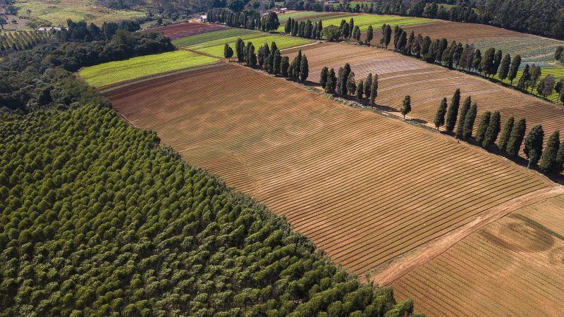 Das Landschaftsbild zeigt einen von Zypressen durchzogenen, unbestellten Acker in direkter Nachbarschaft zu einem dichten Wald.