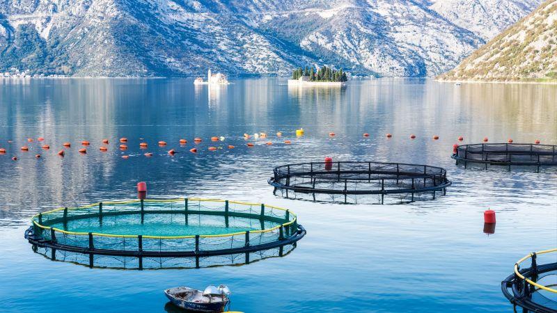 Im Vordergrund liegen die Käfige einer Aquafarm im glatten blauen Wasser in der Mündung eines Fjordes. Im Hintergrund säumen Felsen das Gewässer.