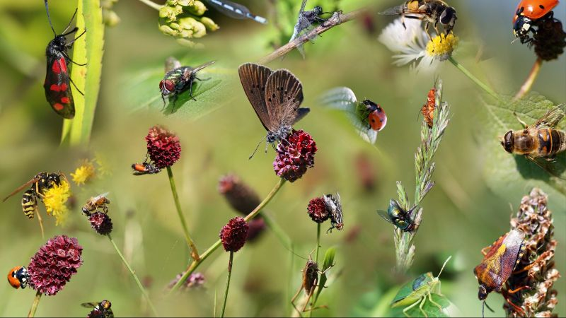 Die digitale Kollage zeigt diverse heimische Insekten auf verschiedenen Blütenständen.