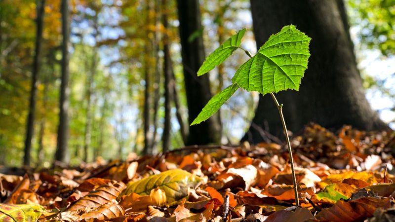 Baumkeimling in einem Wald.