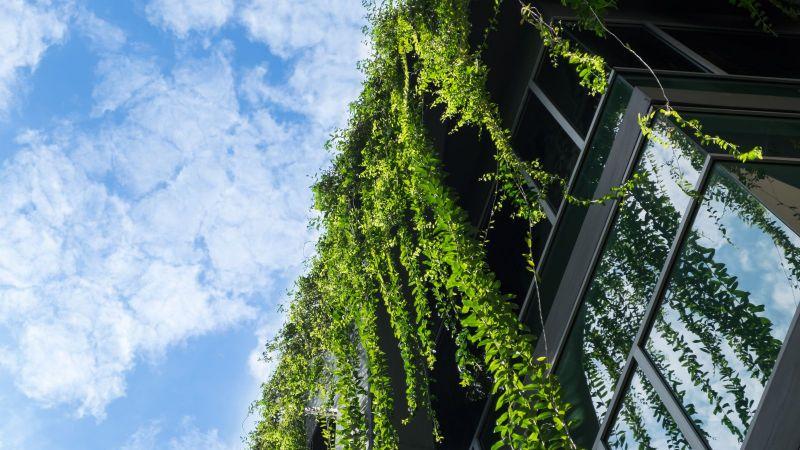 Glashaus bedeckt von grünem Efeu mit blauem Himmel.