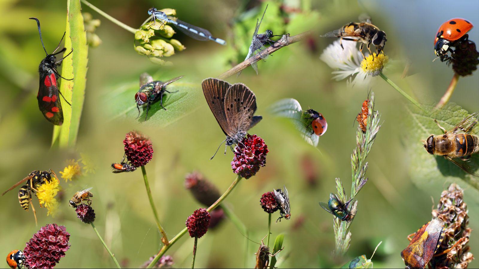 Eine Vielzahl an Insekten, zum Beipiel Marienkäfer und Schmetterlinge, sitzen auf einer Reihe an Blüten und Blättern vor einem grünen Hintergrund.