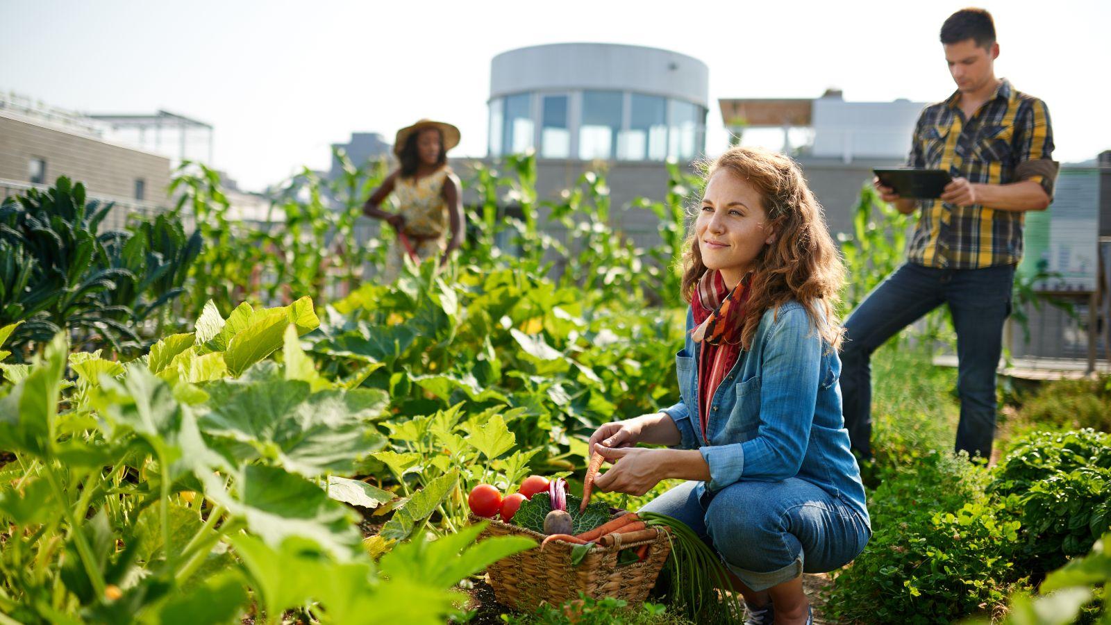 Zwei Frauen und ein Mann befinden sich auf einem Dachgarten. Im Mittelpunkt steht ein gefüllter Gemüsekorb zwischem sattem Grün. Im Hintergrund zeichnen sich die umliegenden Hausdächer ab.