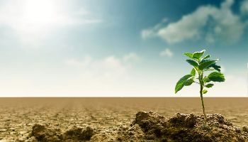 Eine kleine Pflanze steht im Sonnenlicht auf einem trockenen leeren Acker.