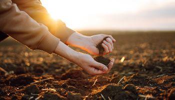 Eine Person lässt auf einem Acker Erde von der linken Hand in die rechte Hand rinnen.