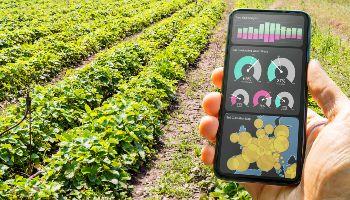 Vor einem bepflanzten Feld hält eine Hand ein Handy mit Daten zur Bewirtschaftung.