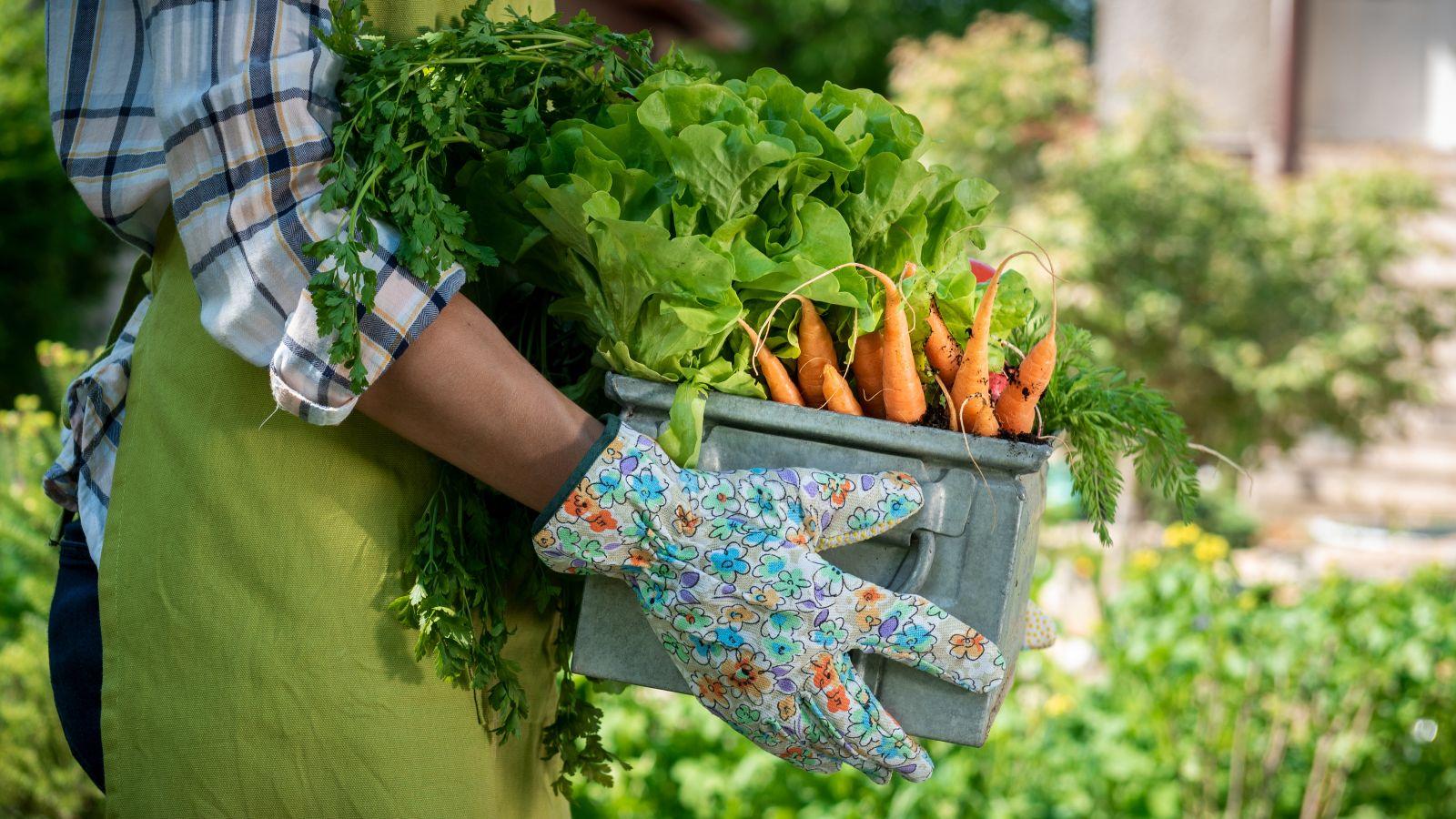 Ein Mann hält eine Gemüsekiste, aus der Karotten rausragen. Im Hintergrund ist ein verschwommener Garten zu sehen.