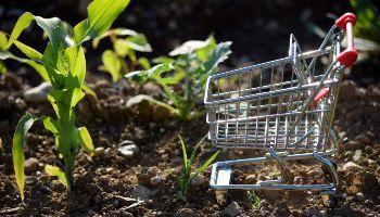 Ein Miniatur-Einkaufswagen steht im Feld neben einem Maistrieb. Den Untergrund bildet aufgelockertes Erdreich mit vereinzelten Kieseln.